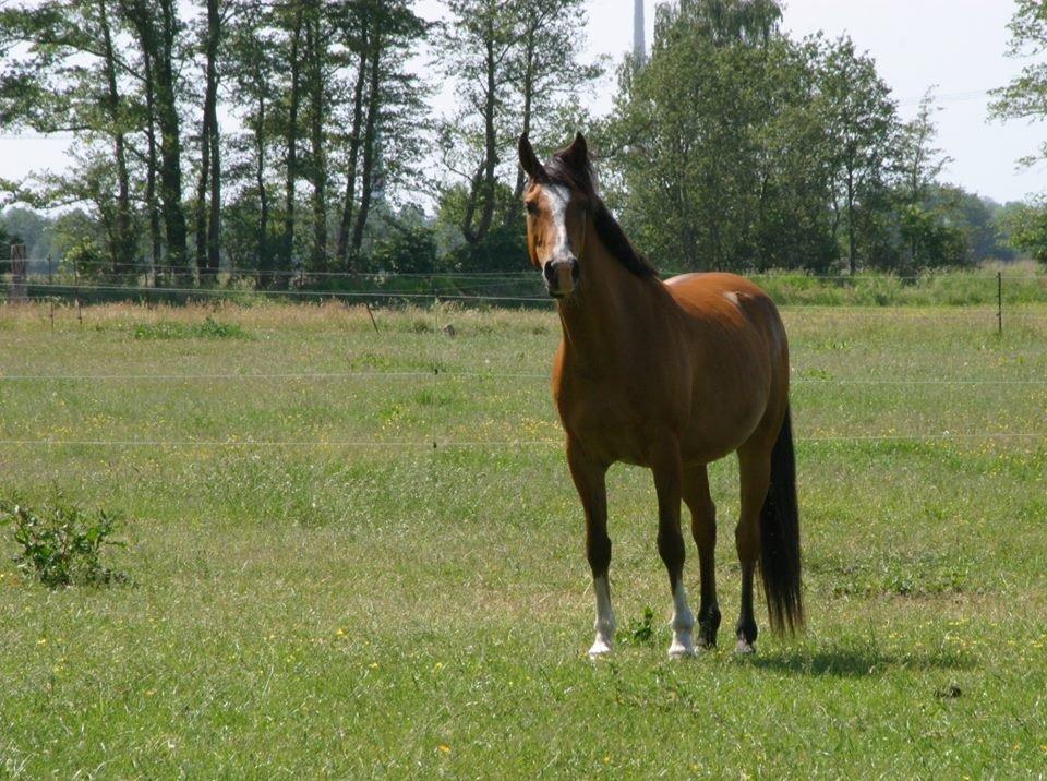 Najlepši konji na svetu - Page 5 5Kpzxy