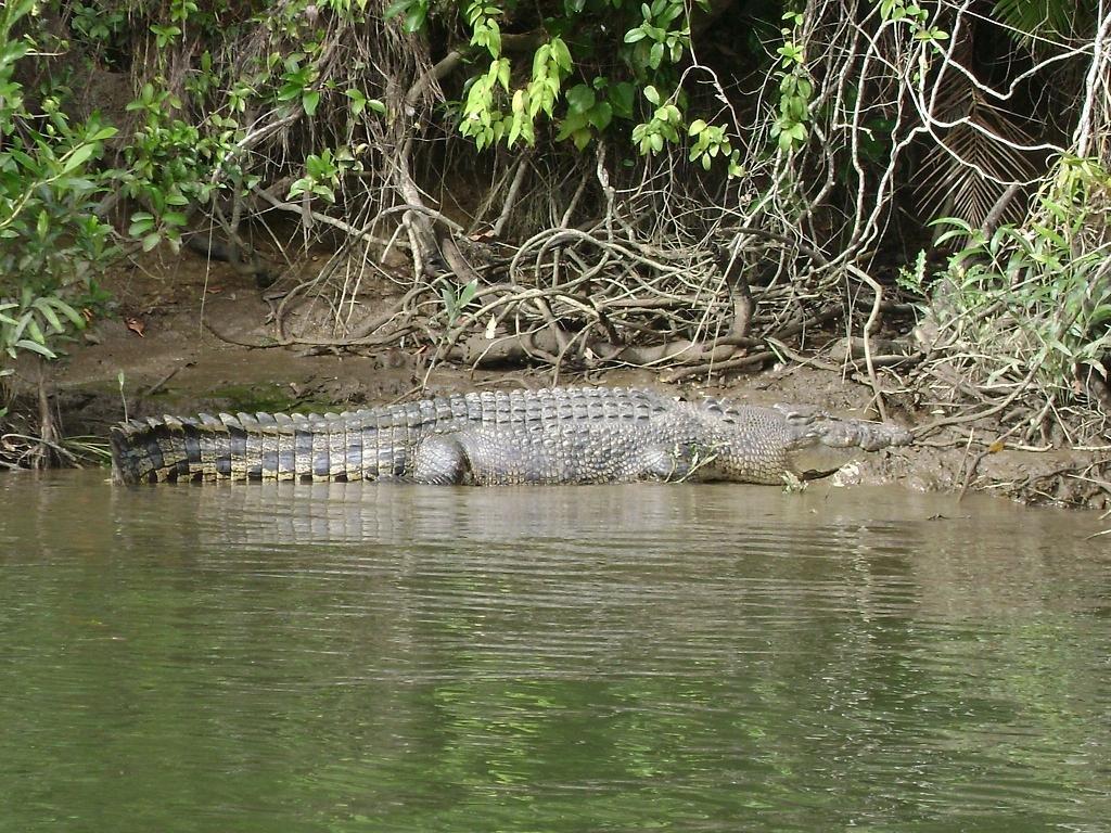 Krokodili - Page 3 EnjkXg
