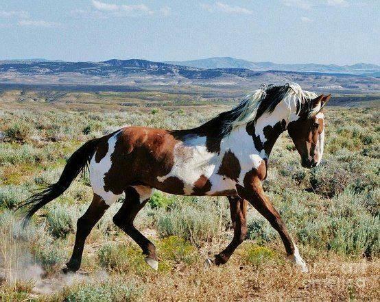 Najlepši konji na svetu - Page 4 WRaxjx