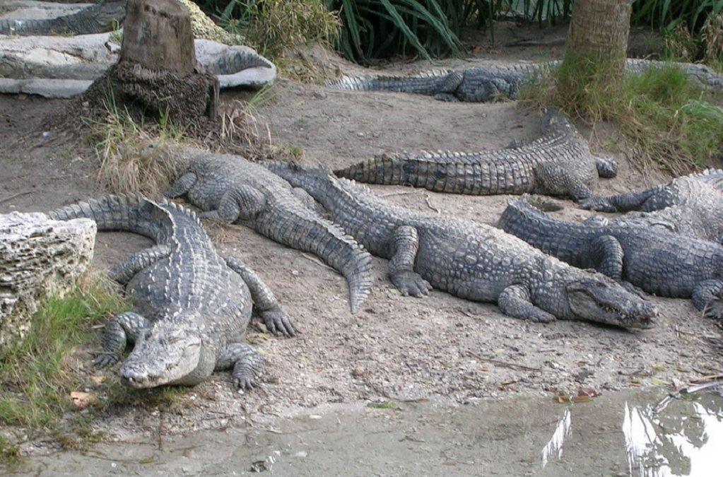 Krokodili - Page 3 W7P2i0