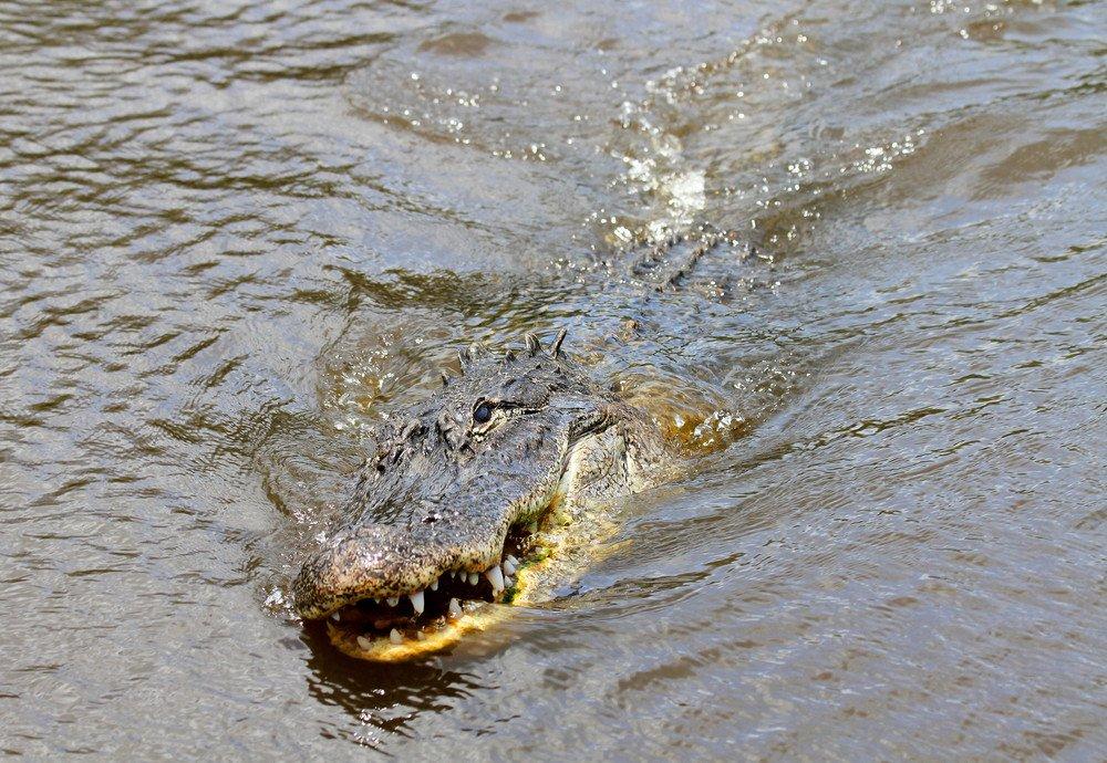 Krokodili - Page 3 M4TkOg