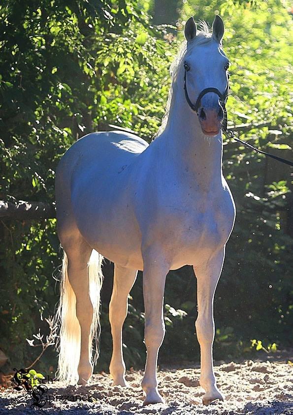 Najlepši konji na svetu - Page 4 SkhqvM