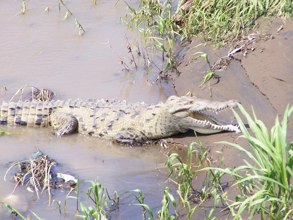 Krokodili - Page 2 B5cZ8t