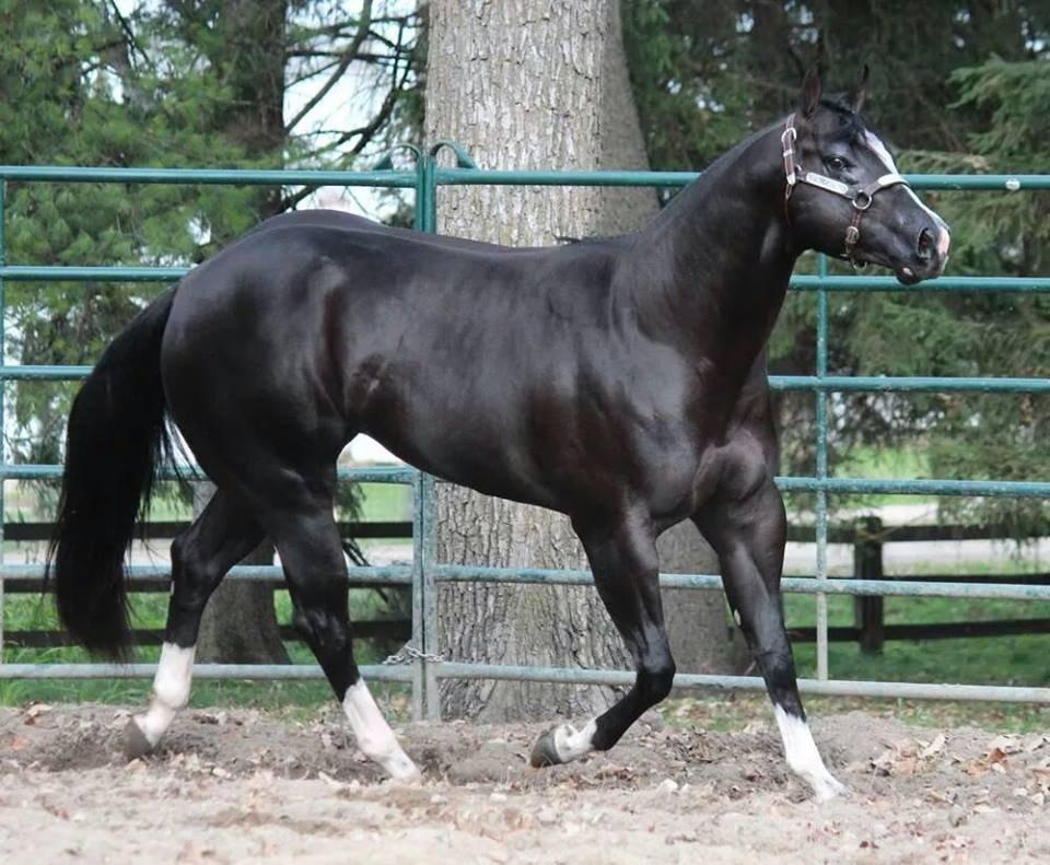 Najlepši konji na svetu - Page 5 0zvL2Y