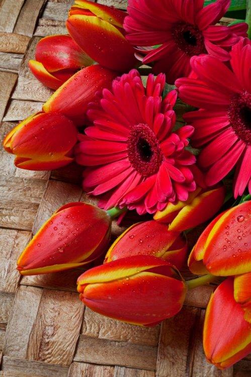Crveno cveće - Page 4 XqeT2g