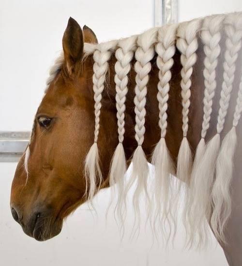 Najlepši konji na svetu - Page 4 OI4s3O