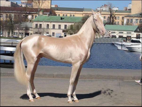 Najlepši konji na svetu - Page 4 UecHCg