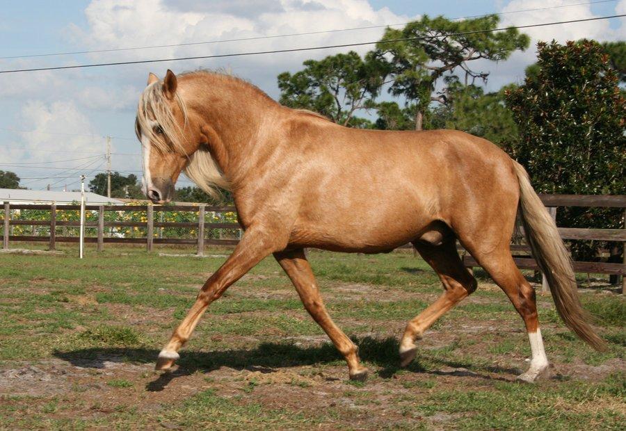 Najlepši konji na svetu - Page 5 MybTDS