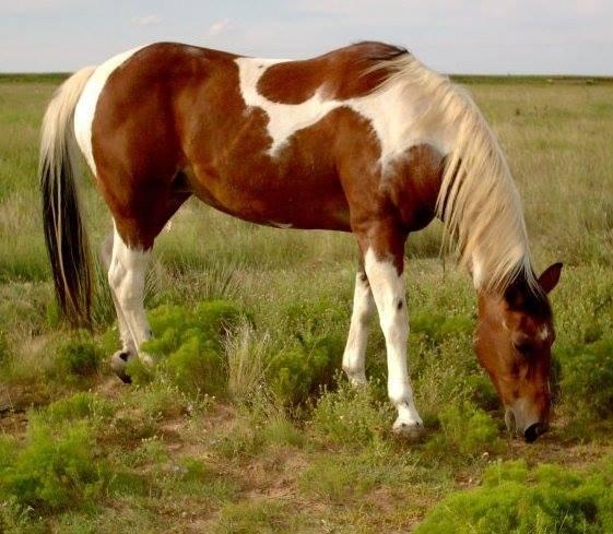 Najlepši konji na svetu - Page 5 RGD1q6