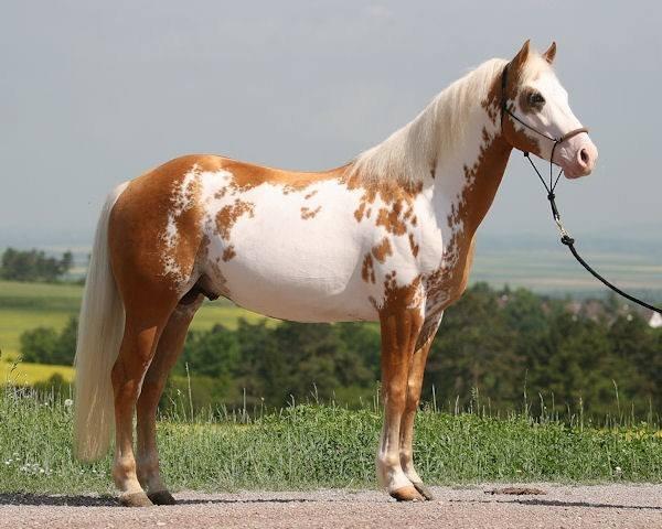 Najlepši konji na svetu - Page 3 Gko57E