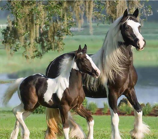 Najlepši konji na svetu - Page 4 1dI2dW