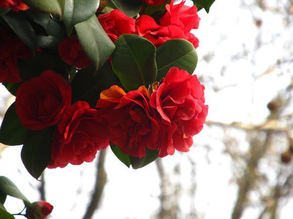 Crveno cveće - Page 4 ZA2paS