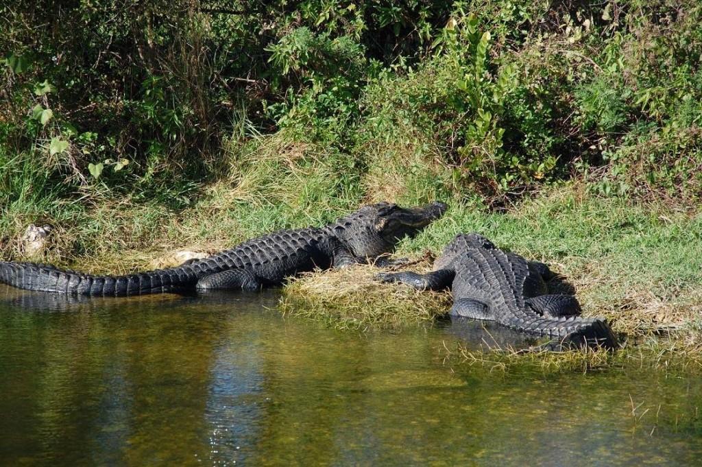 Krokodili - Page 3 KeOc0Y