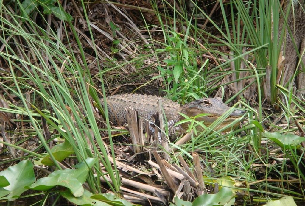 Krokodili - Page 3 GxkQkq