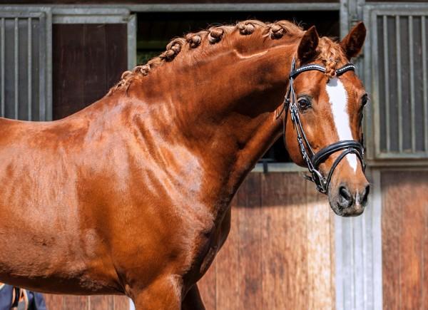 Najlepši konji na svetu - Page 5 1lROXz