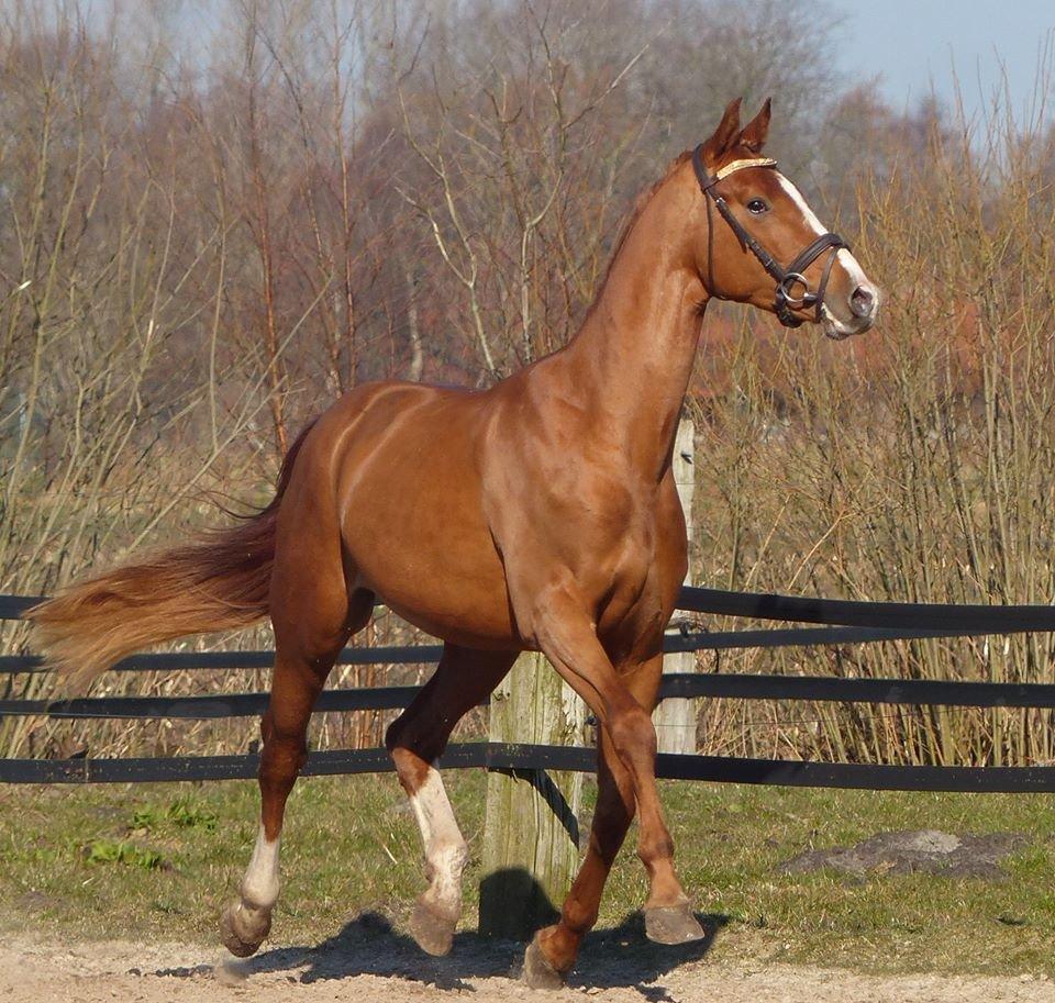 Najlepši konji na svetu - Page 3 BERWRD