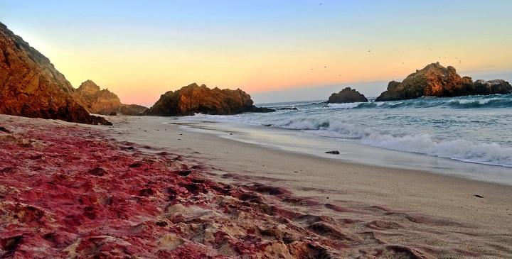 PFEIFFER BEACH , LA PLAYA COLOR PÚRPURA EN CALIFORNIA Ipqyaa