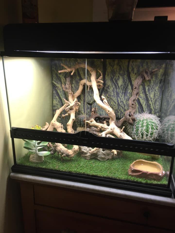 Gecko léopard et équipement 0K4xhx