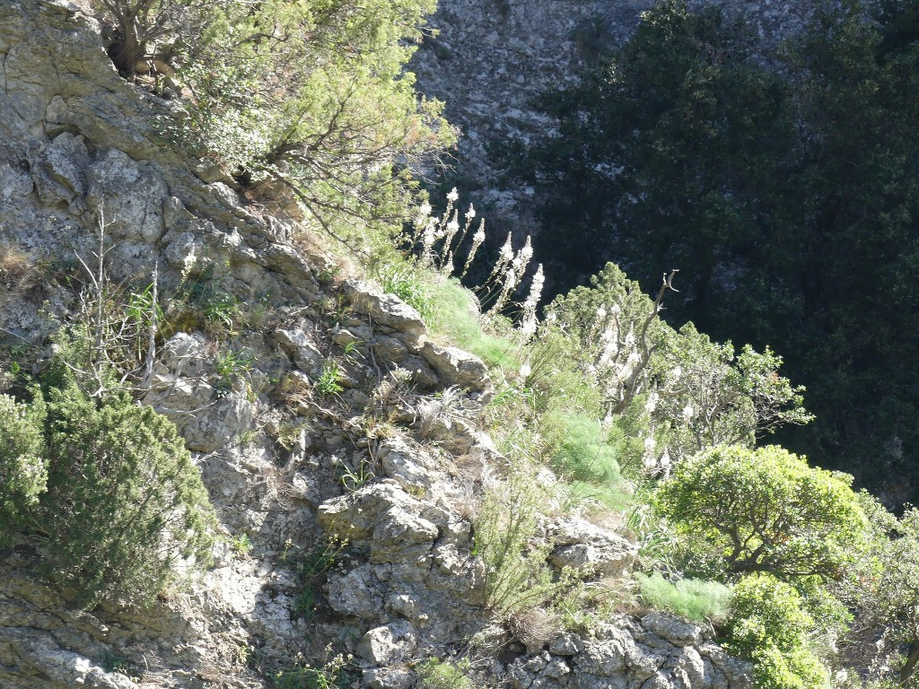 St Pons-Le col de Bertagne-Jeudi 26 avril 2018 TMQSnV