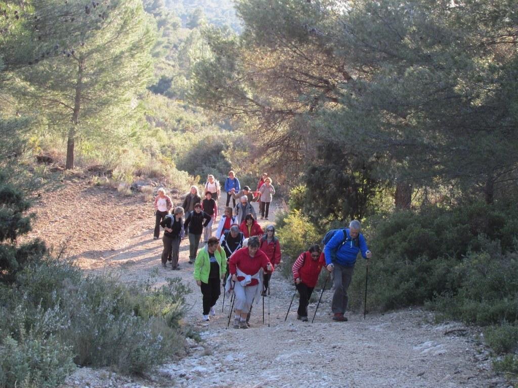 Les collines de Septêmes - La Vigie - jeudi 6 mars 2014 7mqqD4