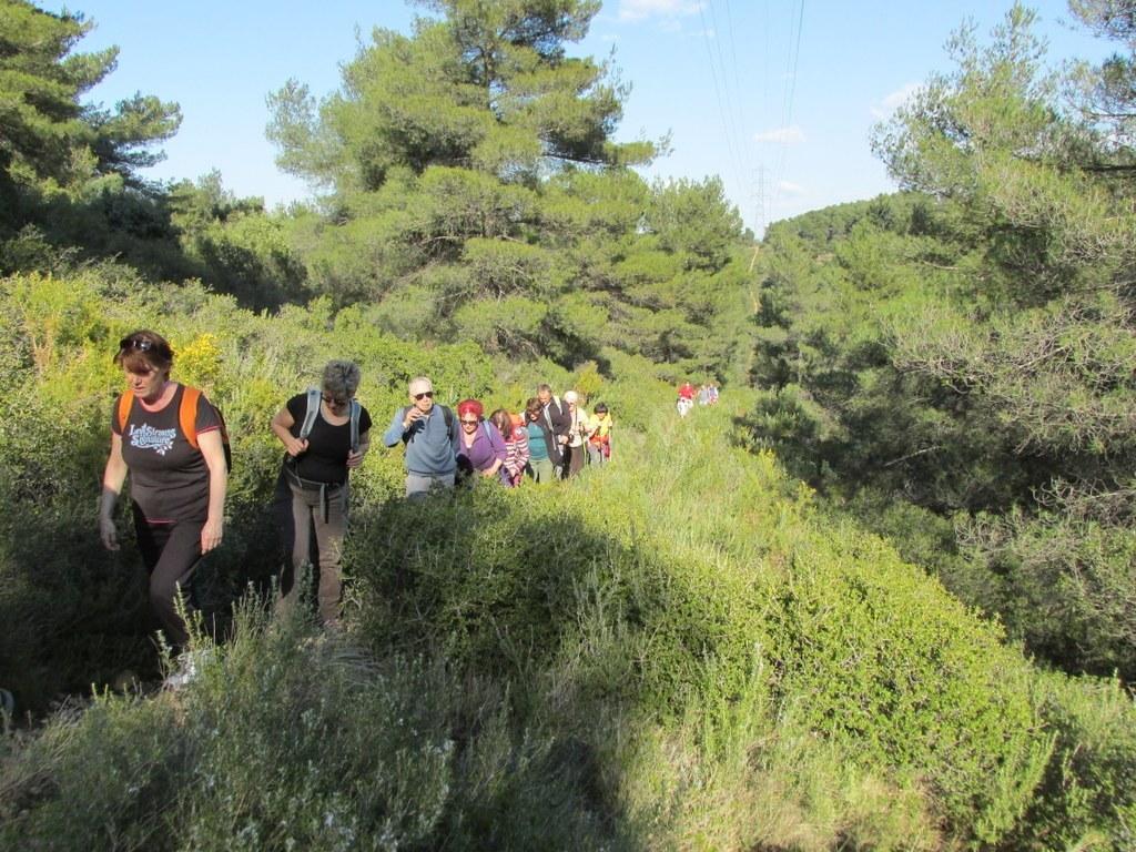 Les collines de Septêmes - La Vigie - jeudi 6 mars 2014 D3Ezoa