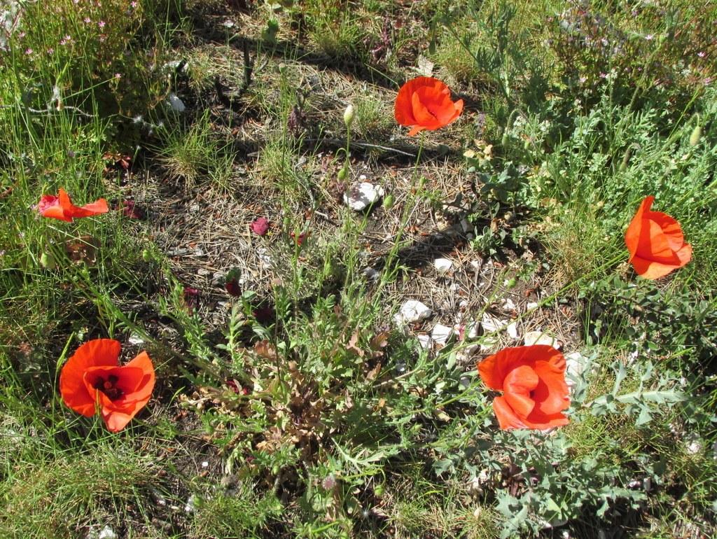 Cabriès - Calas - Jeudi 7 mai 2015 IZrkZm