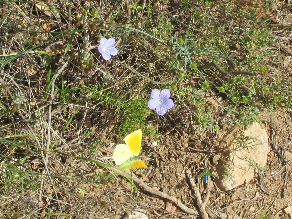 Gémenos - Jeudi matin 11 juin 2015 NbZfWG