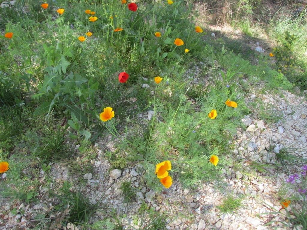 Cabriès - Calas - Jeudi 7 mai 2015 PUCMeU