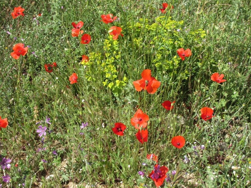 "Peypin d'Aigues "" Source de Mirail"" jeudi matin 02 juin 2016 4OYK5K"