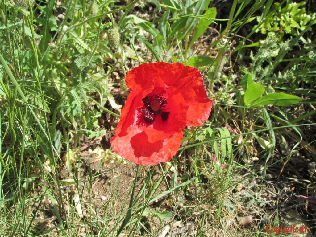 Saint-Mitre-les-Remparts - Etang du Pourra - Jeudi 28 avril 2016 W4GSiW