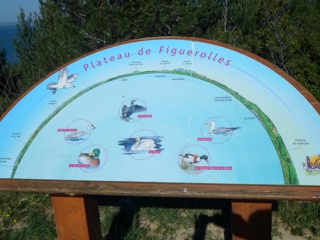 St Mitre - Figuerolles -jeudi 20 avril 2017 GGNs4V