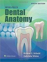 Woelfels Dental Anatomy 9e ADYd0p