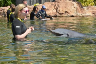 TR photo 20 février au 5 mars 2016 WDW/Universal/Discovery Cove/Kennedy Space Centre - Page 2 XoRGGm
