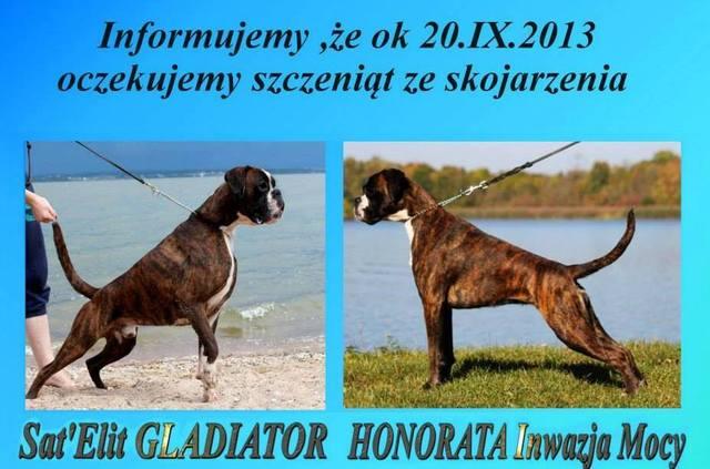 SAT'ELIT Gladiator Qkn4