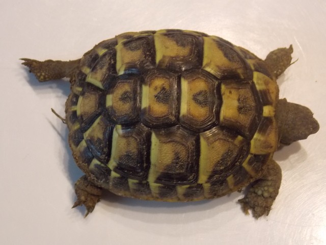 identifier mes 2 tortues RuHcq1