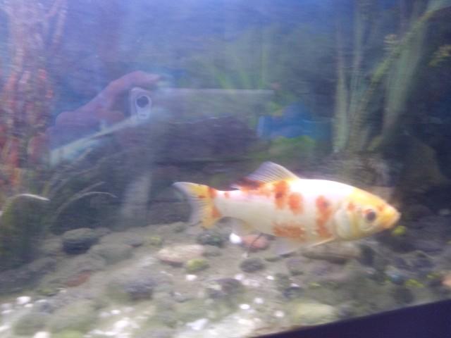 Nombre de poissons JDg9jv