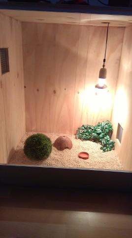 Quel reptile mettre dans mon terrarium ? RIaRro