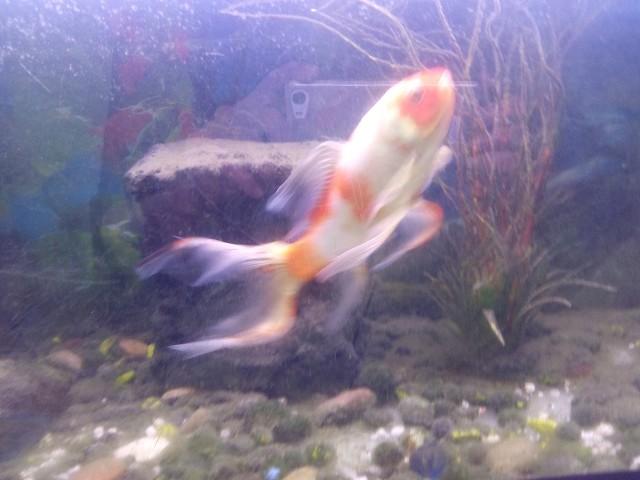 Nombre de poissons N3OZ5y