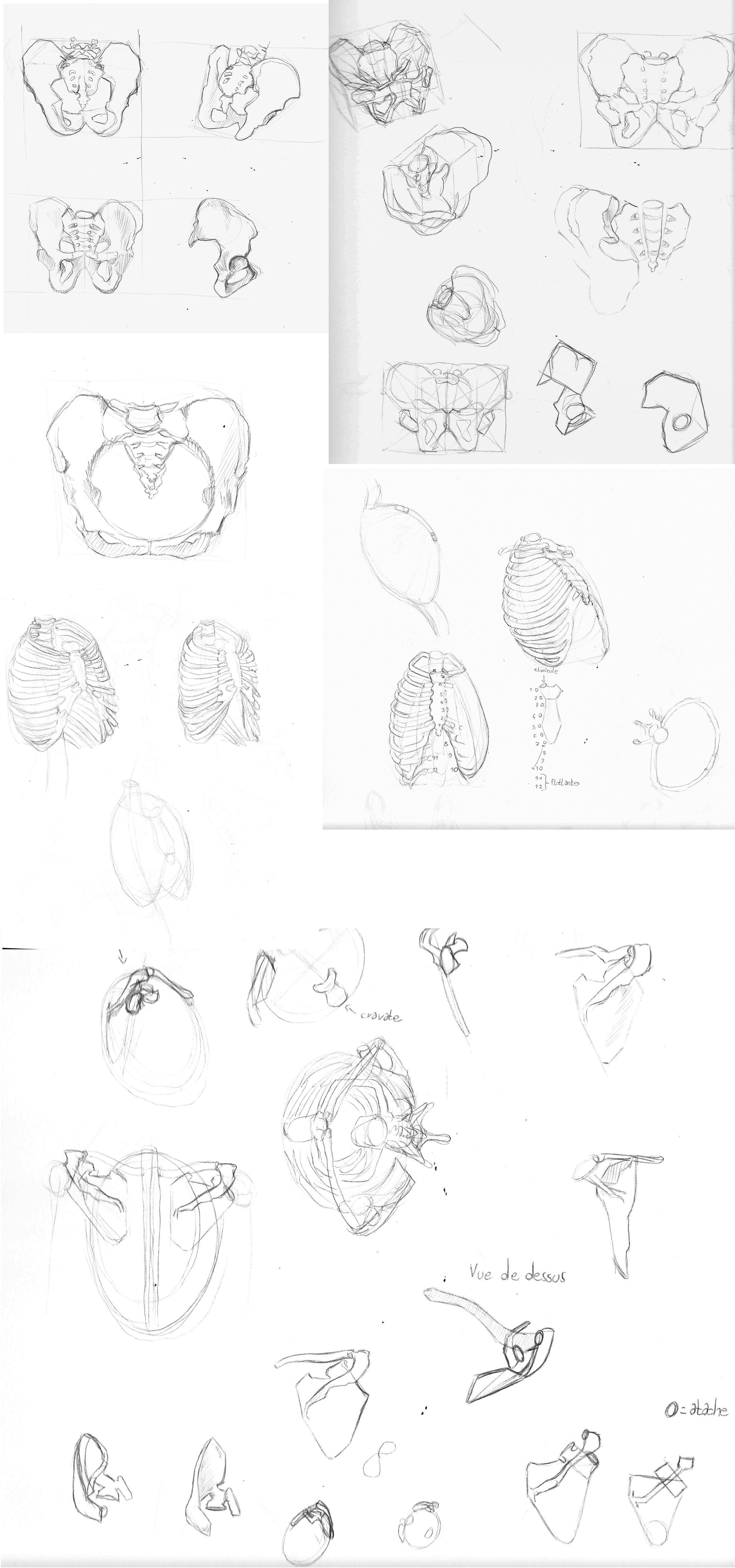 [defis] Lundi Anatomie - Page 3 4uo3