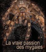 La Passion des Mygales