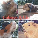 COBAYE & CIE