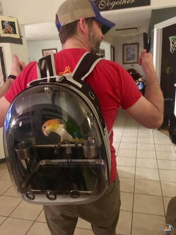 Transporter son oiseau domestique