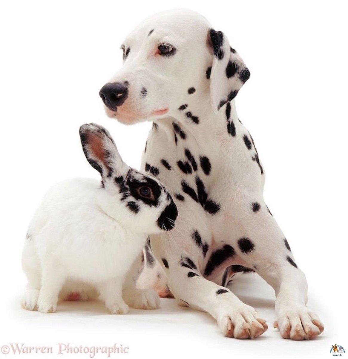 animaux qui se ressemblent 2