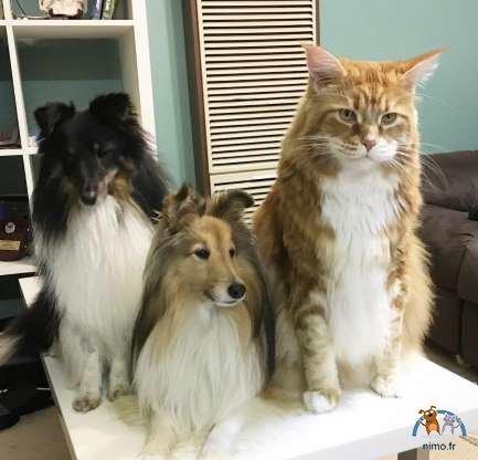 le-plus-gros-chat-du-monde