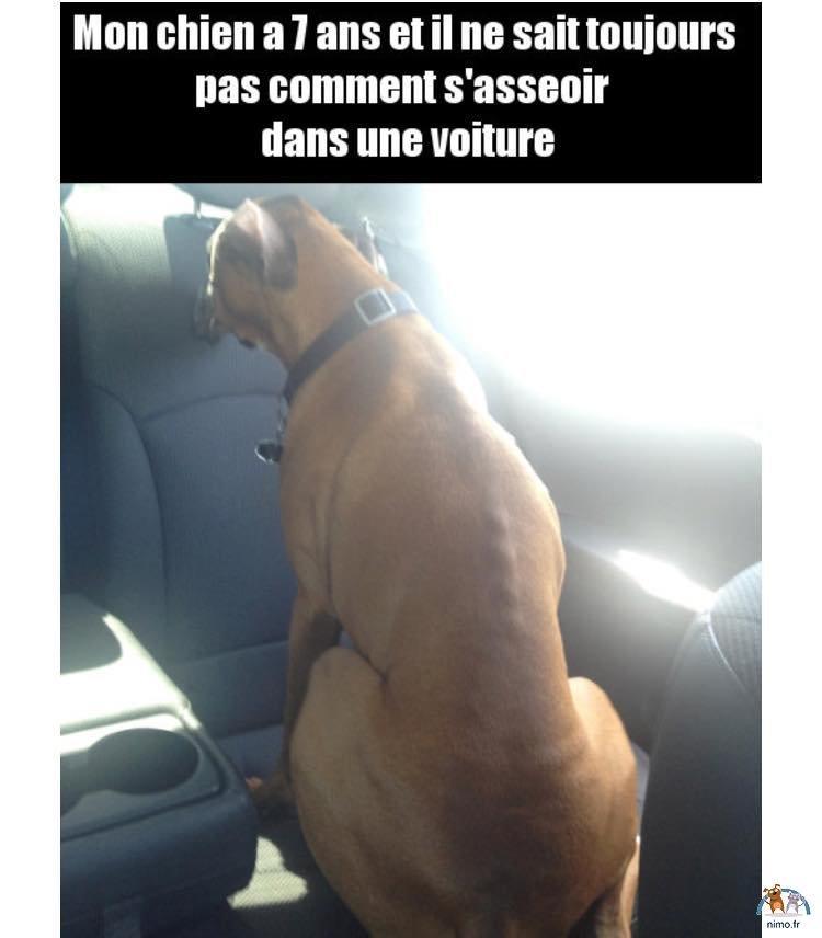 chien dans la voiture