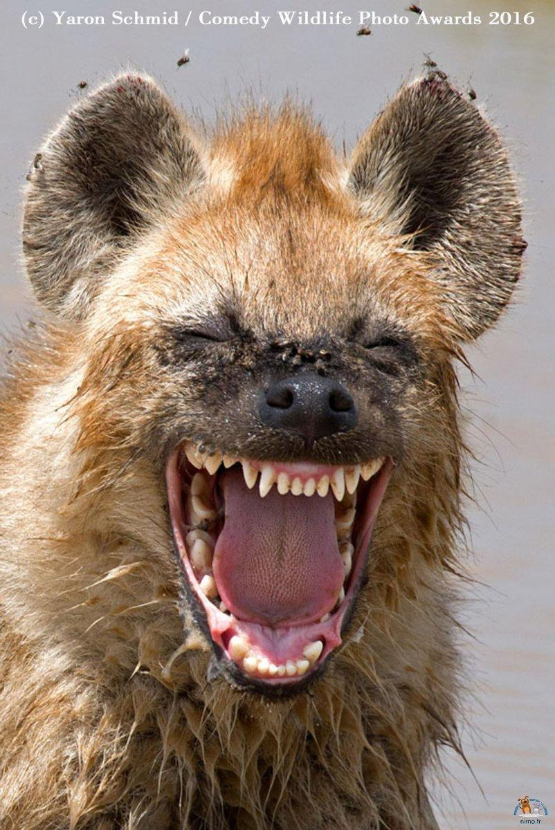 Comedy Wildlife Photo (17)