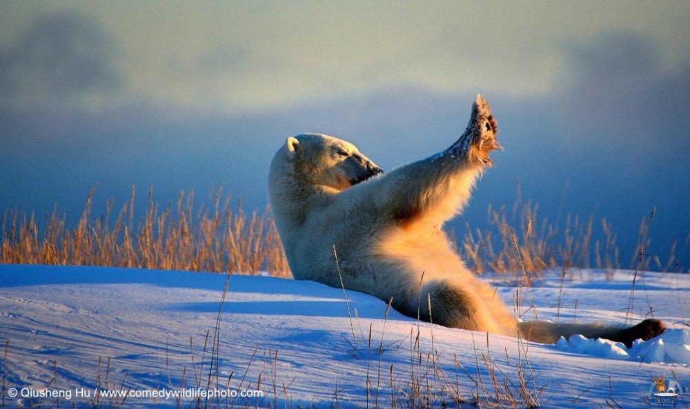 Comedy Wildlife Photo (13)
