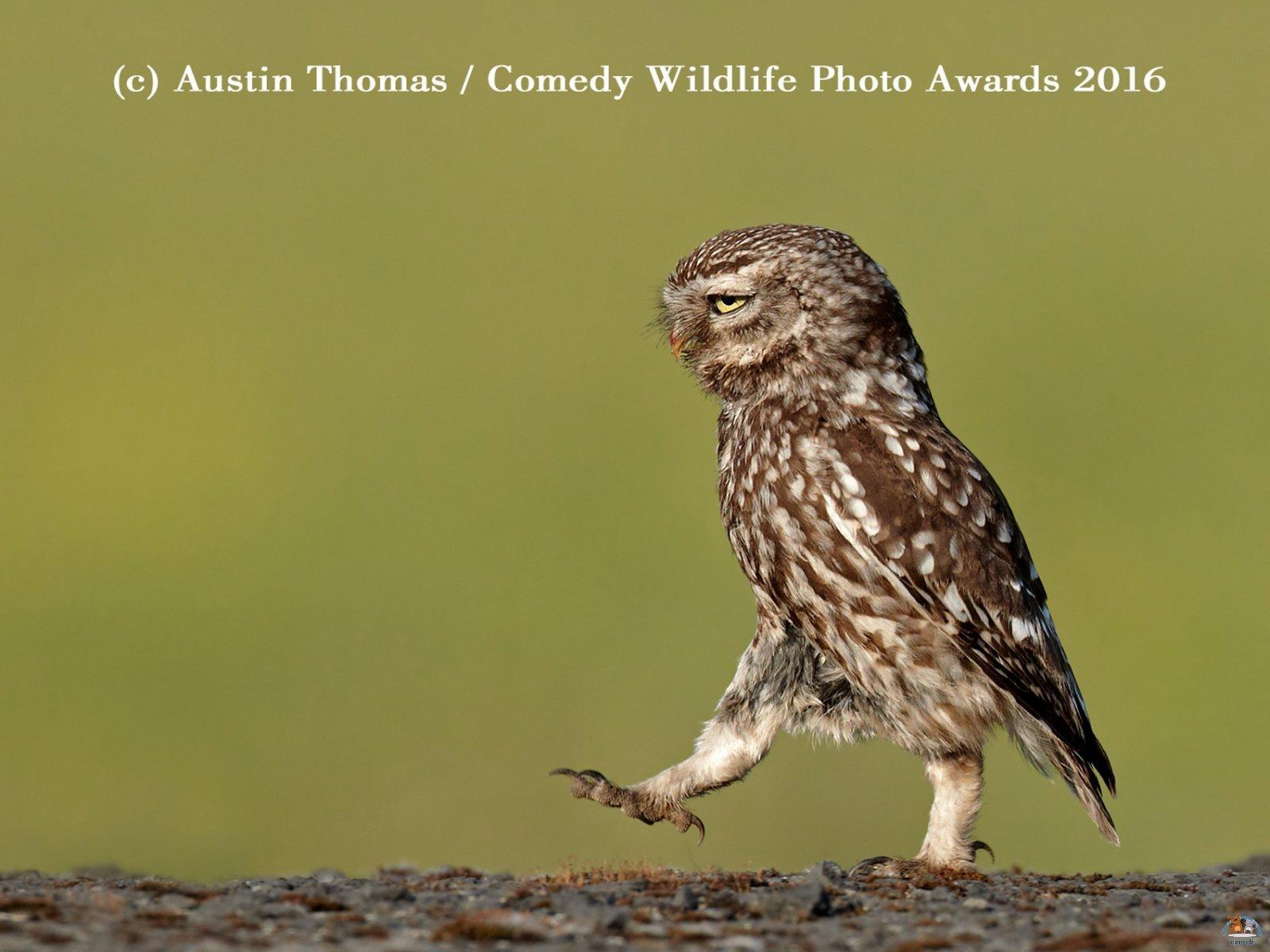 Comedy Wildlife Photo (2)