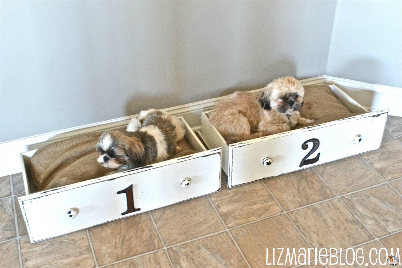 Paniers pour chiens DIY