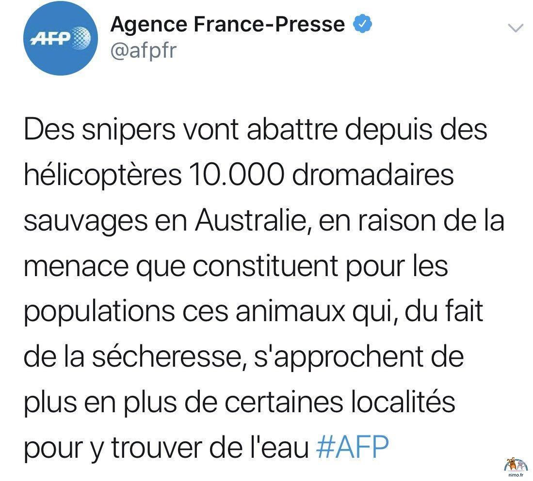 L'Australie va abattre 10.000 dromadaires sauvages